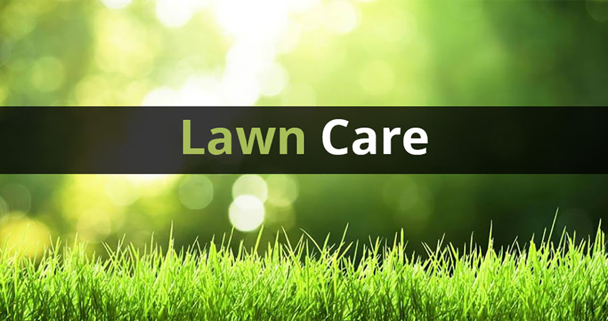 3 Ways To Save Money On Spring Lawn Care - My Superb Environmentally  Friendly Yard Site 2877