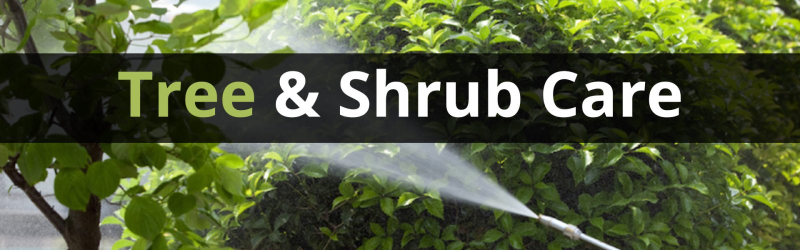 trett and shrub care
