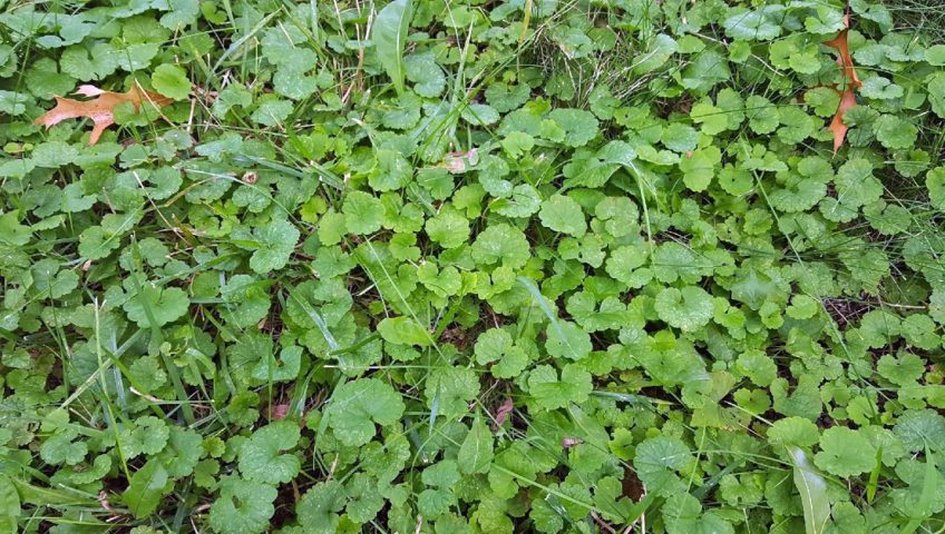 Get Rid of Weeds the Right Way!