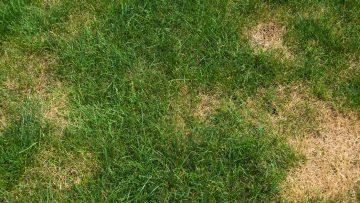 Prevent lawn fungus - Bluegrass Lawn Service