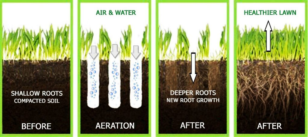 Aeration Explained