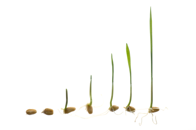 stages of grass seed germination